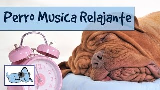 Music To Help Your Nervous Dog - Nature Sounds To Soothe Anxiety