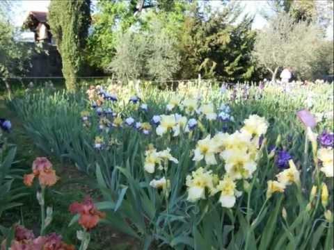 The Iris Garden in Florence Italy