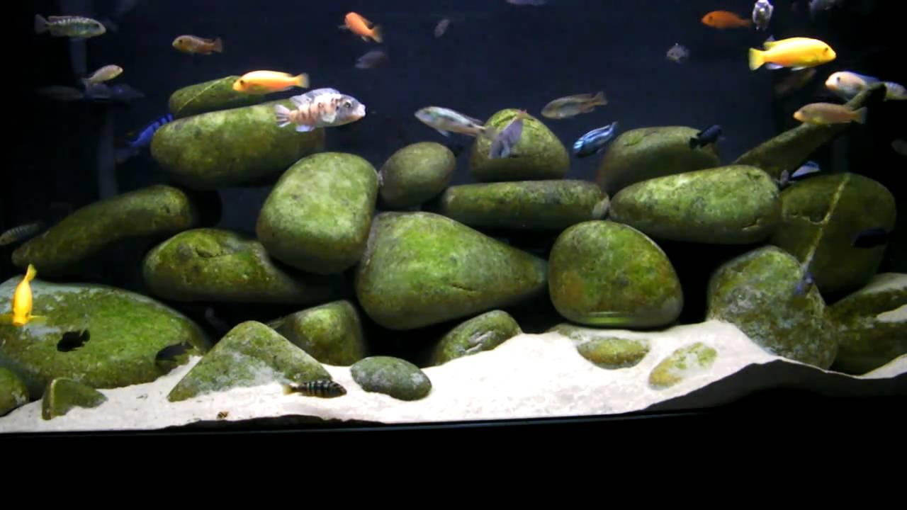 130g African Cichlid Mbuna Aquarium  Tank  Natural Lake