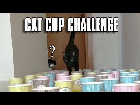Cat Cup Challenge | Can My Cats Make It?