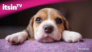 Forscher wissen: Darum finden wir Hundewelpen süß
