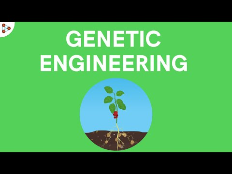 Genetic engineering | Don't Memorise