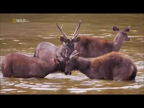 Wild Thailand Documentary 2017