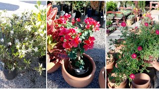 10 Plantas Com Flores Que Gostam De Sol Pleno