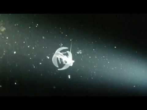 Pelagic Magic Black Water - Kona, HI (HD)