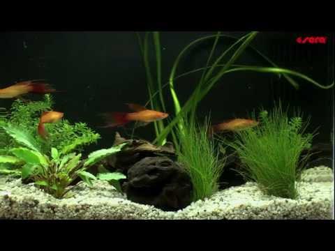 Справочник: Как да създадем аквариум