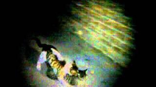 SeX CatS.3gp