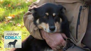 Саамские собаки. Планета собак 🌏 Моя Планета