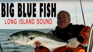 Big Bluefish Caught In Long Island Sound NY