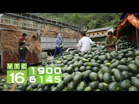 Trung Quốc siết nhập khẩu, nông sản Việt gặp khó   VTC16