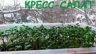 Кресс-салат.Выращивание зимой.Зелень на подоконнике.Супер способ!
