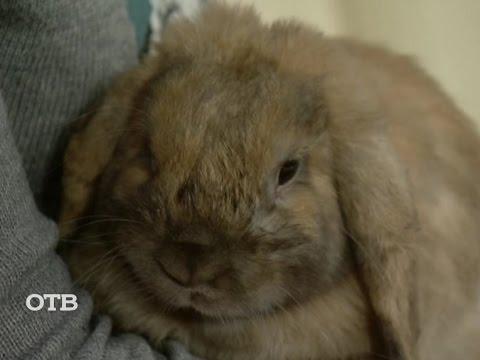 Кролики - Сельхоз животные в Ревде
