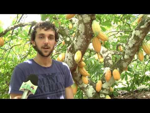 Panorama Farm - Cocoa the Manjar of the Gods