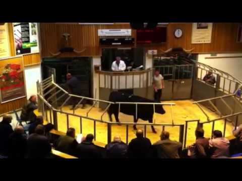 Cattle Mart Kirkwall