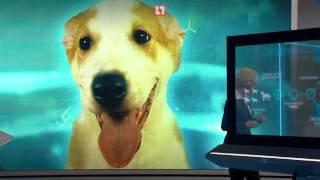 Клонирование собак