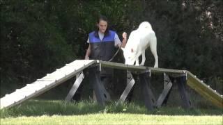 Argo (siberian Husky) Boot Camp Dog Training Demonstration
