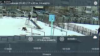 Собака напала на ребенка в Ревде