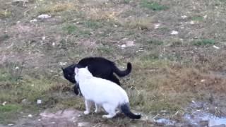 Новополоцкие коты разгоняют по понятиям .....