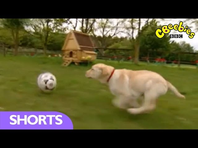 CBeebies: Big Barn Farm - The Football Match