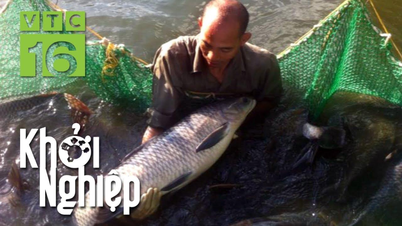 Cho ăn 3 tấn cỏ/ngày, nông hộ kỳ vọng thu về 50 tấn cá | Khởi nghiệp 542 | VTC16