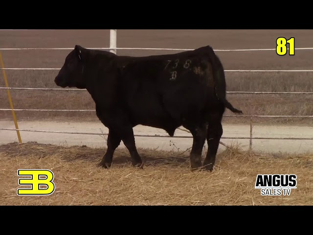 Benoit Angus Lot 81