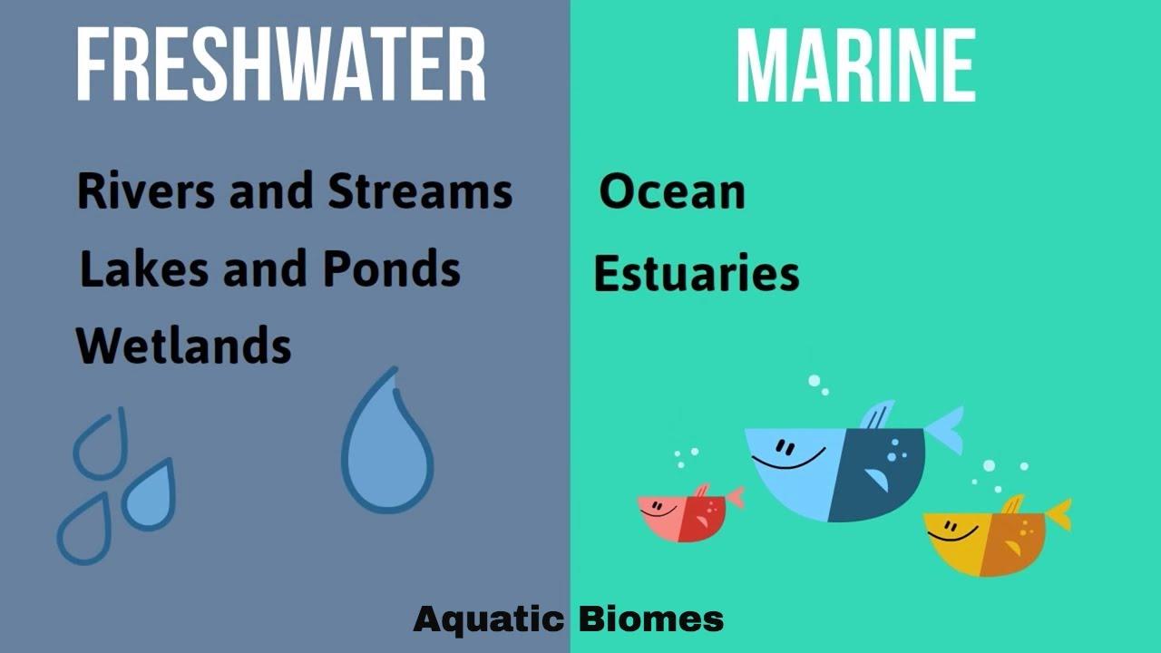 medium resolution of Aquatic Biomes - YouTube