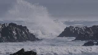 Ocean Life - Buffels Bay