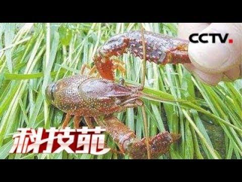 《科技苑》 20171205 稻田成了生态园 | CCTV农业