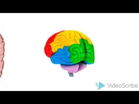 El TDAH- ¿Cómo afecta el TDAH en el cerebro de los niños?