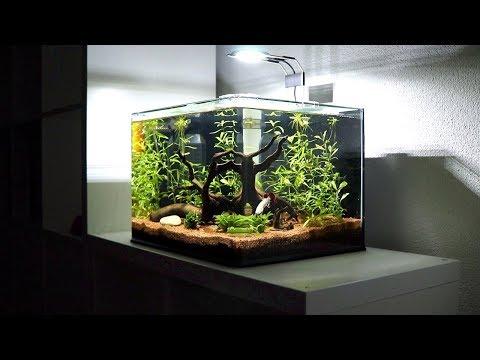 New Betta Fish Tank Setup | Red Dragon Halfmoon Plakat Full Mask