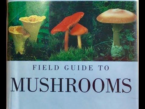 Audubon Field Guide Review , Mushrooms Of North America
