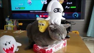 ゲームしてたら灰色猫すずまろがやって来ました。ぬいぐるみを使って遊...