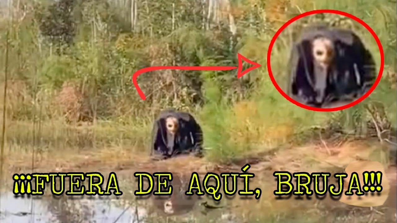 Download UNA BRUJA REAL ES ENCONTRADA EN UN BOSQUE Y TERMINA MUY MAL