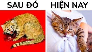 Mèo đã thuần hóa chúng ta như thế nào (hai lần!)