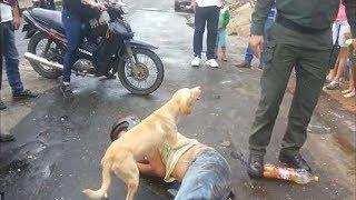 Преданная собака защищает хозяина, заснувшего прямо на улице