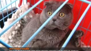 Международная выставка кошек ''Кубок Баку'' WCF 2013