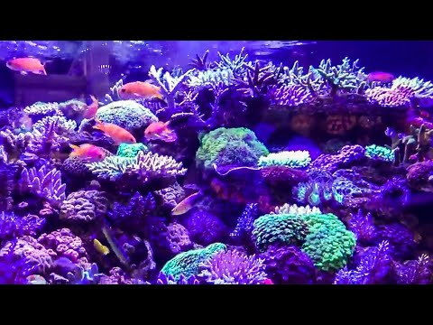 EPIC REEF AQUASCAPE with Reef Builders Interzoo 2018