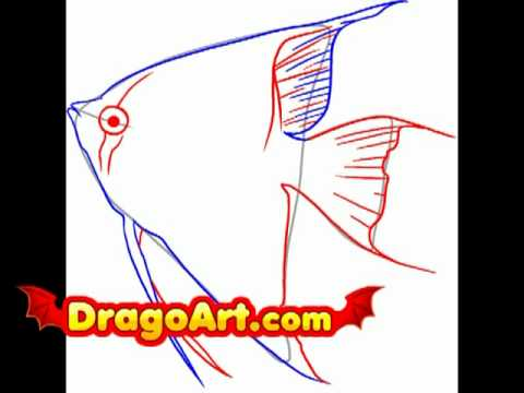 How To Draw Angelfish, Step By Step