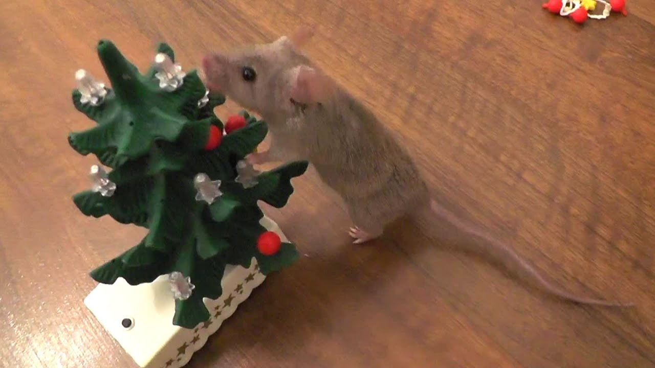 Mouse decorates the Christmas tree [Original] - YouTube