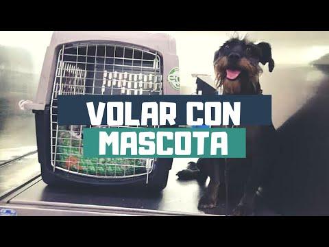 ¿Cómo volar en avión con tu mascota? | Viaje Pet Friendly en Puerto Escondido