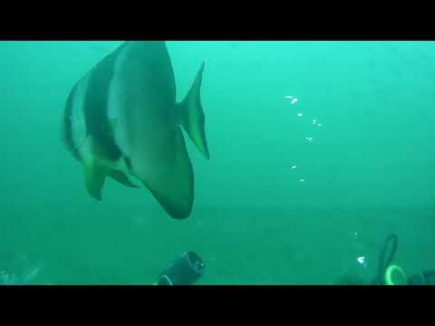 April 2018 dive on T-Barge, Durban, South Africa.