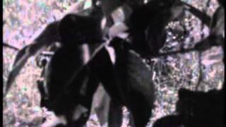 Rhodesia Light Infantry -