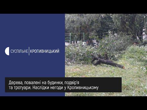 Суспільне Кропивницький: Дерева, повалені на будинки, подвір'я та тротуари  Наслідки негоди у Кропивницькому