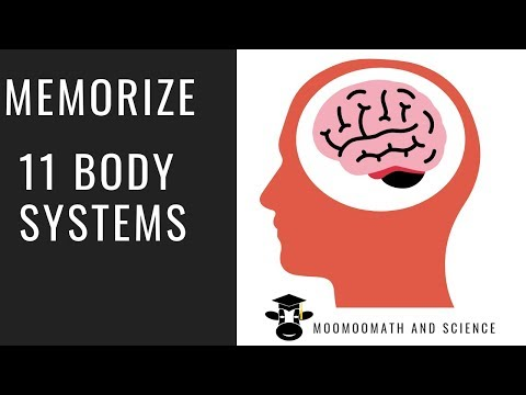 How To Memorize The 11 Organ Systems Of The Human Body