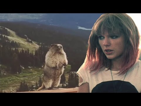 СУРОК ОРЁТ (Taylor Swift Edition)