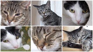Nyankurutv Vol.5  にゃんくるtv【かわいい猫カフェ/保護猫】【cute Cat Cafe】