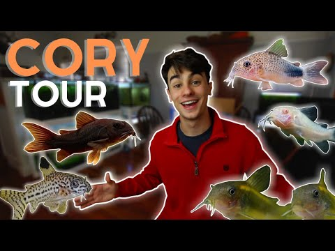 Corydoras Collection - Tour And Update