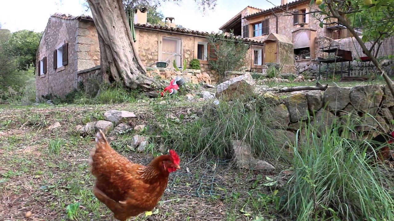 Nuestras gallinas ponedoras alquiler casa r stica mallorca youtube - Casas para gallinas ...