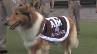 Reveille Tradition Texas A&M