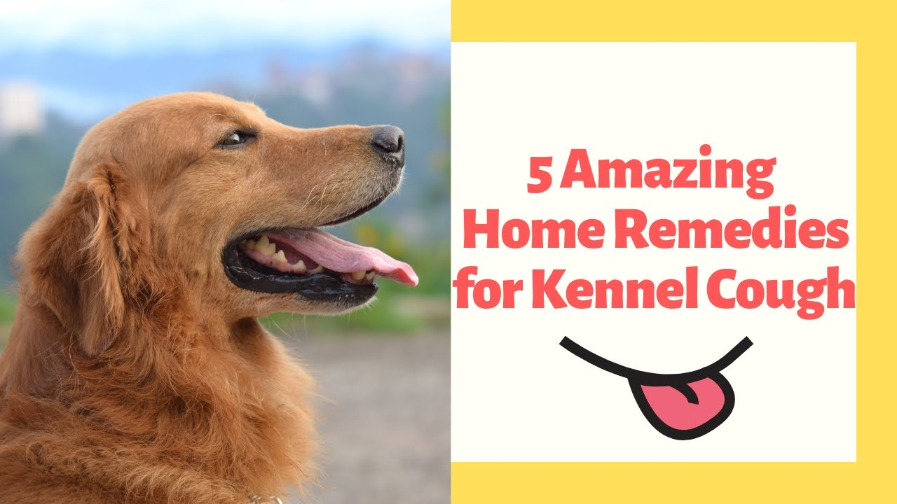How to treat kennel cough in dogs naturally